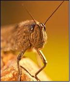 Australian swarms