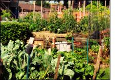 garden as if