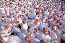 Bird Flu in Mexico