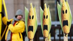 Russian and GMO