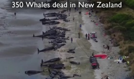 dead whales