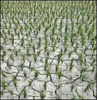 2012 forecast