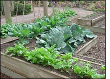 grow own food